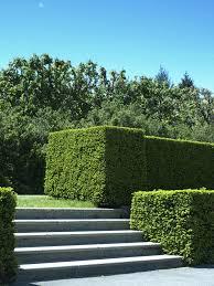 41 incredible garden hedge ideas for your yard photos