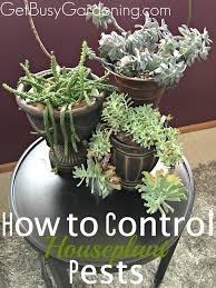 how to control houseplant pests
