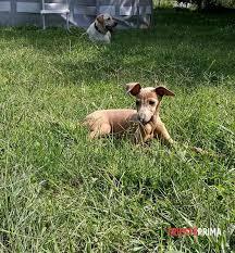 cani in cerca di casa il piccolo tao in cerca di casa segnalazione a trieste
