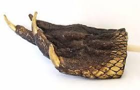 alligator claws gator claw collectibles ebay