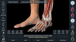 essential anatomy 3 apk essential anatomy 5 ipa cracked for ios free