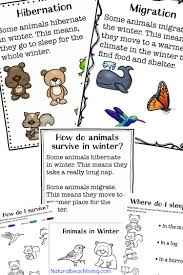 the ultimate winter animals for preschool activities natural