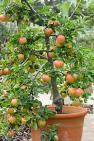 container gardening 5 easy foods to grow edible gardening