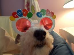 Birthday Cake Dog Meme - sweet happy birthday dog gifs quotes wishes for facebook