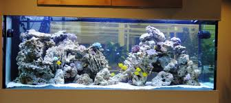 Reef Aquarium Lighting In Situ Chooses Acrooptics Led Reef Light System For 540g Install