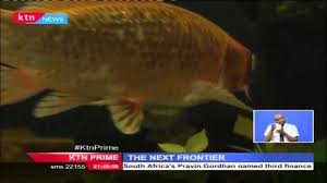 the next frontier ornamental fish farmer who makes a living