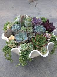 succulent arrangements to create and care for your stunning succulent arrangements