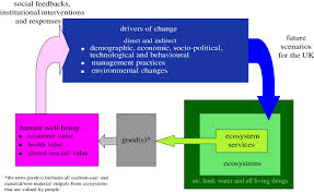 the science u2013policy interface the role of scientific assessments