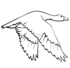 flying swallow bird coloring page flying swan colouring pages