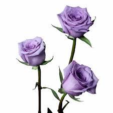 lavender roses avant garde lavender roses pack of 100 stems ifloral