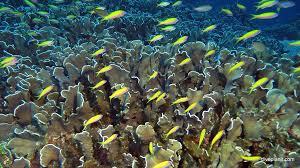 wet n dry adventures christmas island in australia u0027s indian ocean