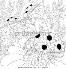 ladybug sketch stock images royalty free images u0026 vectors