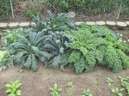 the 5 best crops for self sufficient gardeners stoney acres