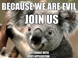 Angry Koala Meme - koala memes google search funny stuff pinterest memes