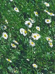 12 common weeds that take over your lawn hgtv