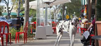 park avenue winter park pet friendly places to take your pooch in orlando wheretraveler