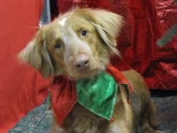 Dogs For The Blind Adoption 50 Best Animal Shelter Dogs Images On Pinterest Animal Shelter