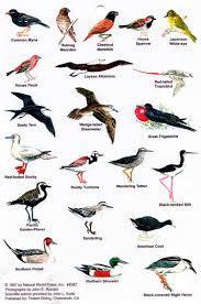 Hawaii Birds images Hawaii bird chart travel gt hawaii pinterest birds hawaii jpg