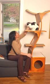Modern Design Cat Furniture by 87 Best 9 Out Of 10 Cats Agree Images On Pinterest Animals