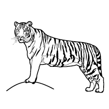 fancy tiger coloring pages prissy inspiration free 9 pagesjpg