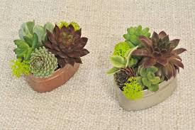 photos of succulents types of succulent plants