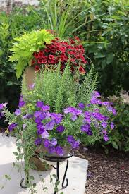 102 best a watched pot images on pinterest pots flowers and