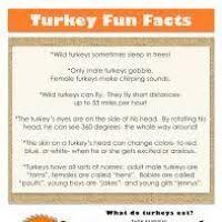thanksgiving turkey facts divascuisine