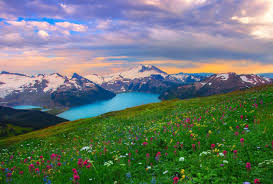 canada flowers sunset garibaldi provincial park canada flowers sunset lakes