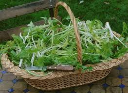 cuisiner le pissenlit cuisiner les mauvaises herbes risotto d orge au pissenlit