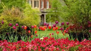 flower lovely nature flowers pink fence tulip desktop background