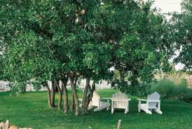Backyard Shade Trees Putting Down Roots Landscape With Trees Perfect For Your Home And