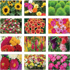 flower food packets summer flower seeds kit set of 12 packets trustbasket