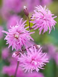 12 Best Annual Flowers For by Perennials