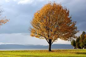 free photo fall autumn tree leaves free image on pixabay