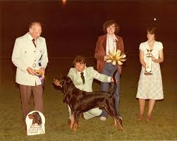 bluetick coonhound uk breeders black and tan coonhound history u0026 training temperament