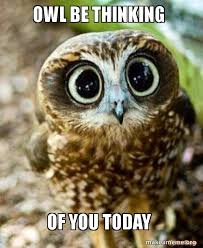 Thinking Of You Meme - owl be thinking of you today make a meme