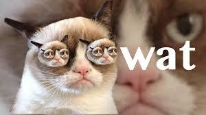 Grumpy Cat No Memes - grumpy cat wallpaper bdfjade