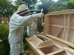 hives the beehive maker