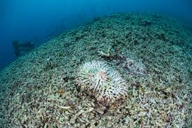 thanksgiving reefs protecting coral reefs with some clever chemistry american council