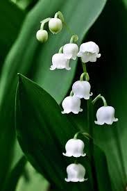 White Flowers Pictures - 214 best flowers board images on pinterest beautiful flowers