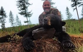 Bears Montana Hunting And Fishing - my montana black bear hunt treeline pursuits