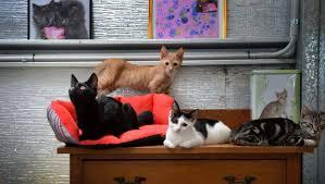 kitten crisis fills shelters newcastle herald
