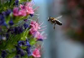 Flowers Bees Pollinate - how to lure the bees butterflies and other pollinators to your