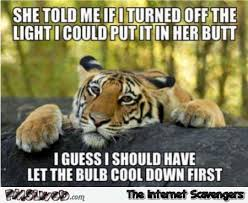 Funny Naughty Memes - my my what a naughty little tiger you are funny pics