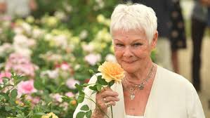 How To Know Your Going Blind Judi Dench Is Losing Her Eyesight Everything You Need To Know