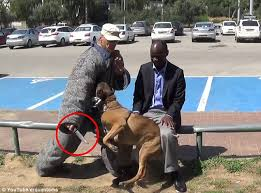 belgian shepherd special forces video footage shows belgian malinois dog from israel stop knife