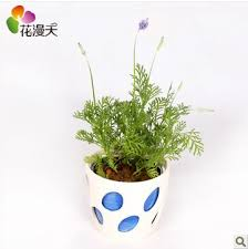 Small Desk Plants by Lavender Flowers In The Office Desk Small Potted Plant Radiation