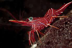 marine arthropod facts and examples