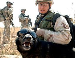 belgian shepherd special forces us military u0027s working dogs are the worst nightmare for the enemy