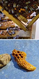 the adventures of hutch the honeybee 388 best images about beekeeping on pinterest honey bees masons